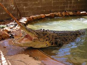 Wyndham Zoological Gardens and Crocodile Park - New South Wales Tourism
