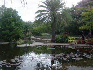Brisbane City Botanic Gardens - New South Wales Tourism