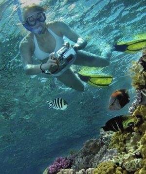 Calypso Reef Charters - New South Wales Tourism