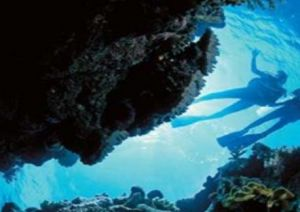 Deep Sea Divers Den - New South Wales Tourism