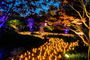 Canberra Nara Candle Festival - New South Wales Tourism