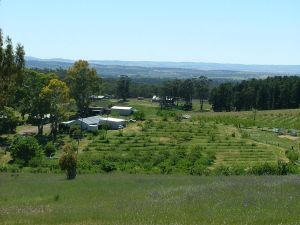 Taralee Orchards - New South Wales Tourism